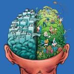 ff_70_brain1_f