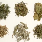 plante halucinogene 150x150 Droguri fabricate acasa cu retete de pe Net. Consumatorii de etnobotanice inventeaza noi euforice (AIM)