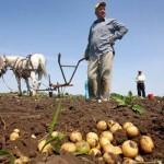 taran roman exterminare 150x150 Exterminarea micului fermier in varianta bolsevicilor & a clicii de asasini economici. De ce trebuie sa i tratam pe neobolsevici ca pe teroristi