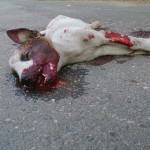 1240461 3618011584354 588763524 n 150x150 FOTO LISTA CRIMEI(incompleta). Romania primitiva, psihopata, bolnava, profund degenerata, inecata in sange!! Masacrul cainilor   septembrie 2013   2014. R.I.P poor souls!