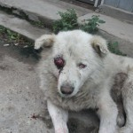 1391580 10151736793979091 282323133 n 150x150 FOTO LISTA CRIMEI(incompleta). Romania primitiva, psihopata, bolnava, profund degenerata, inecata in sange!! Masacrul cainilor   septembrie 2013   2014. R.I.P poor souls!