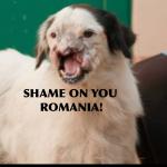 1392032 571304819590006 407025949 n 150x150 FOTO LISTA CRIMEI(incompleta). Romania primitiva, psihopata, bolnava, profund degenerata, inecata in sange!! Masacrul cainilor   septembrie 2013   2014. R.I.P poor souls!