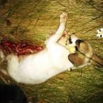 fetita2 150x150 FOTO LISTA CRIMEI(incompleta). Romania primitiva, psihopata, bolnava, profund degenerata, inecata in sange!! Masacrul cainilor   septembrie 2013   2014. R.I.P poor souls!