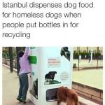 caini_turcia