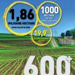 top-600-coperta